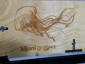 Kijani Grows 1