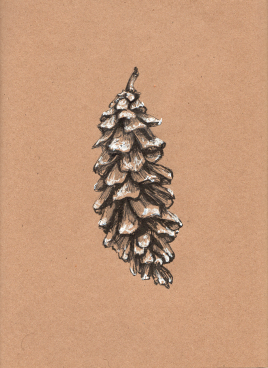 Eastern White Pinecone