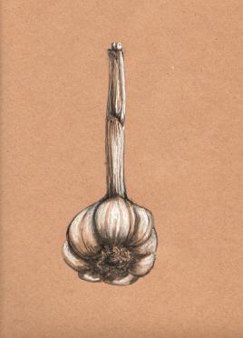 Stem Garlic