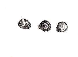Snail Shell Trio