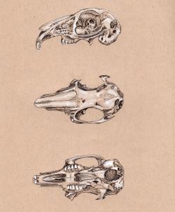 Inktober022 - Study of Degraded Wild Rabbit Skull