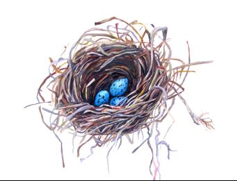 Grackle Nest
