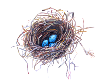 Grackle Nest