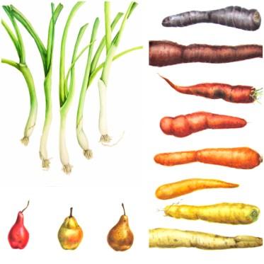 Bright Fruits + Veggies Collage